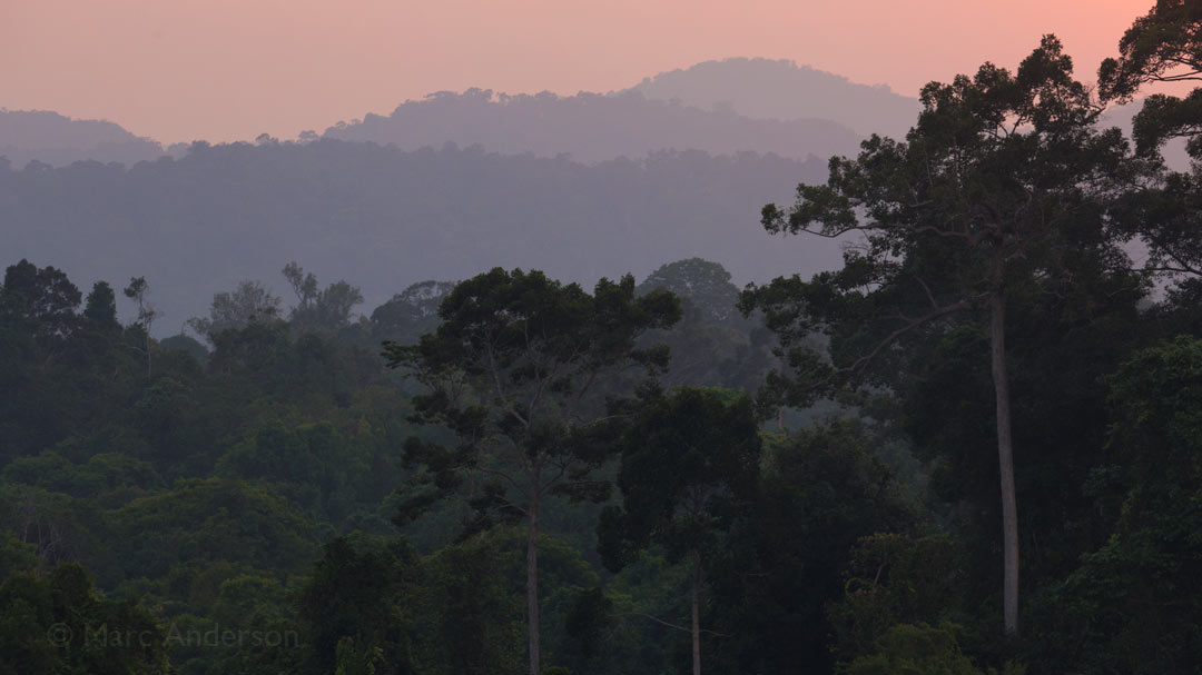 Album Release: Sounds of Wild Thailand I - Thailand's