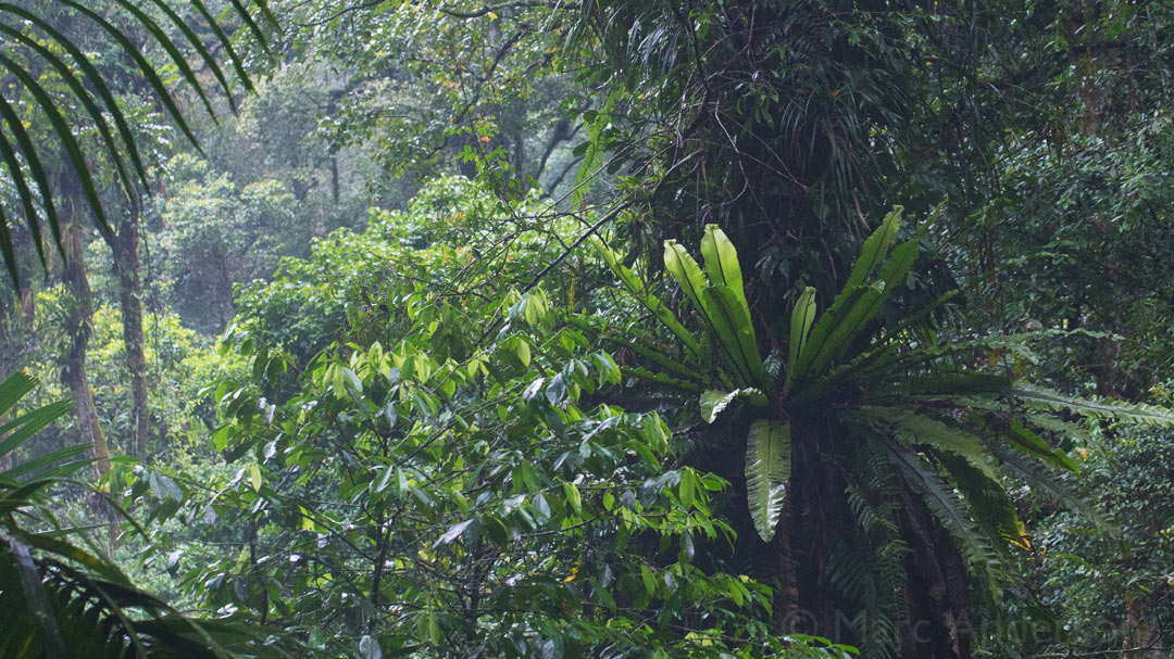 Java's Last Rainforests