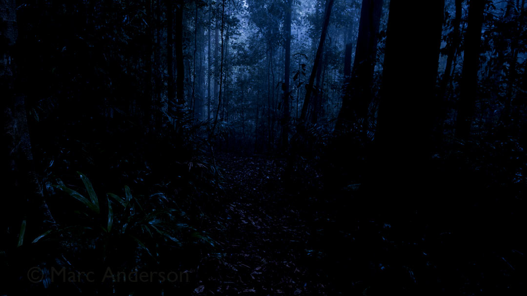 Midnight in Lambir Hills Rainforest, Sarawak (Borneo), Malaysia