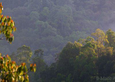 Fraser's Hill Rainforest