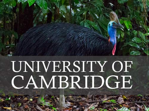 University of Cambridge – West Papua Exhibition
