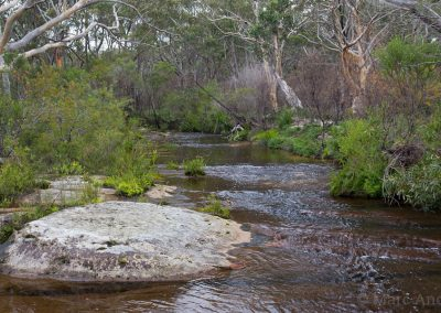 Creek in Dharawal