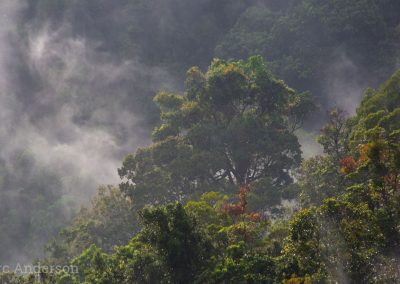 View of cloud forest