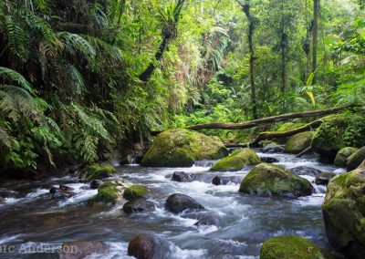 River in montane rainforest