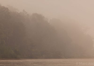 Kinabatangan rainforest at dawn