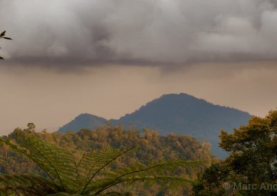 Storm clouds above the rainforest