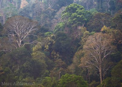 Old-growth tropical rainforest