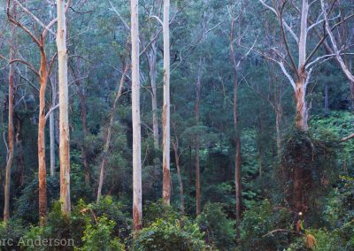 Wet Eucalypt Forest