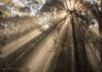 Early morning mist and sun in the forest