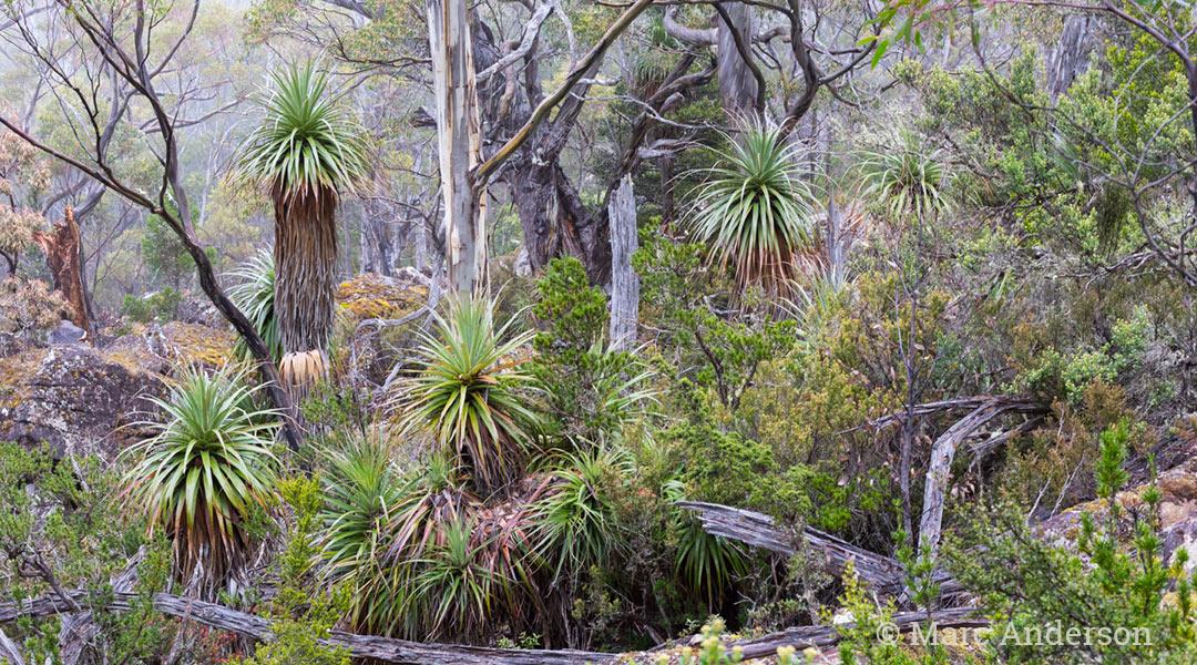 Tasmania's Ancient Rainforest | Wild Ambience