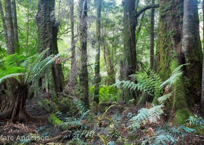 Old-growth rainforest