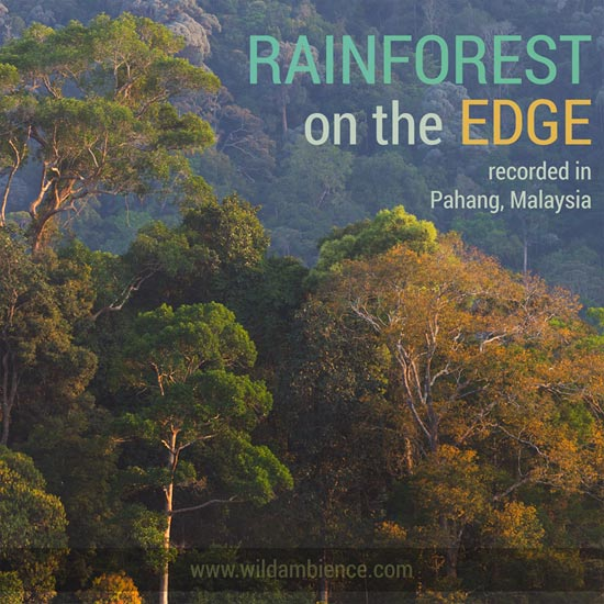 Rainforest sounds for android free download and software reviews.