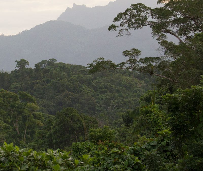 Dewdrops in Fiji's Rainforest