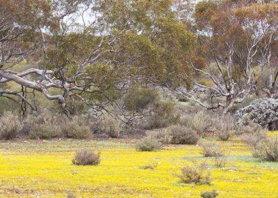 Dry Woodland
