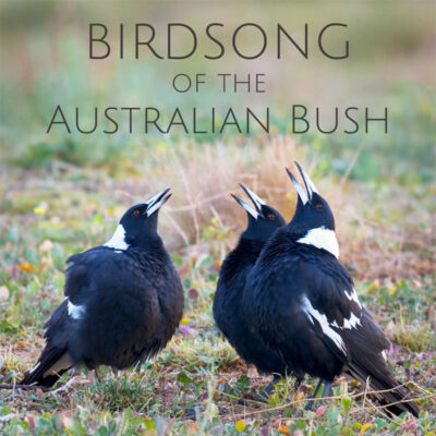 Birdsong of the Australian Bush - Album Cover