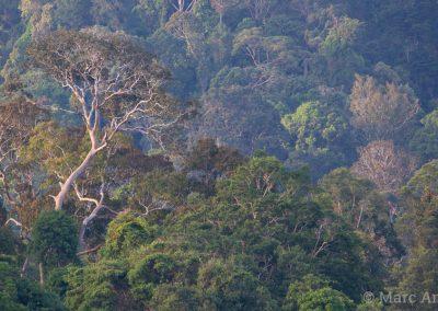Rainforest in Ulu Muda