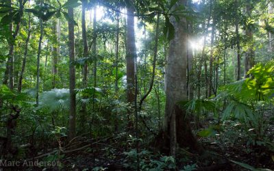 Tangkoko Morning – A Rainforest Soundscape from Sulawesi