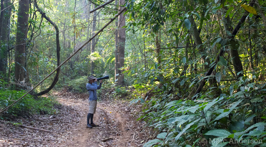 Bird photography in hill forest, Western Forest Complex