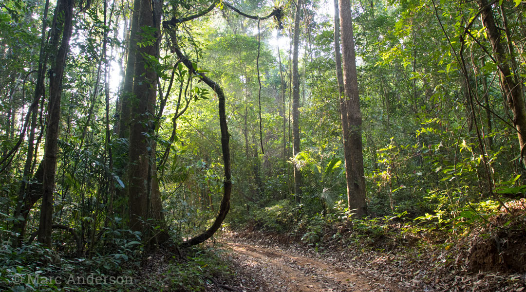 Evergreen hill forest in Thung Yai Wildlife Sanctuary