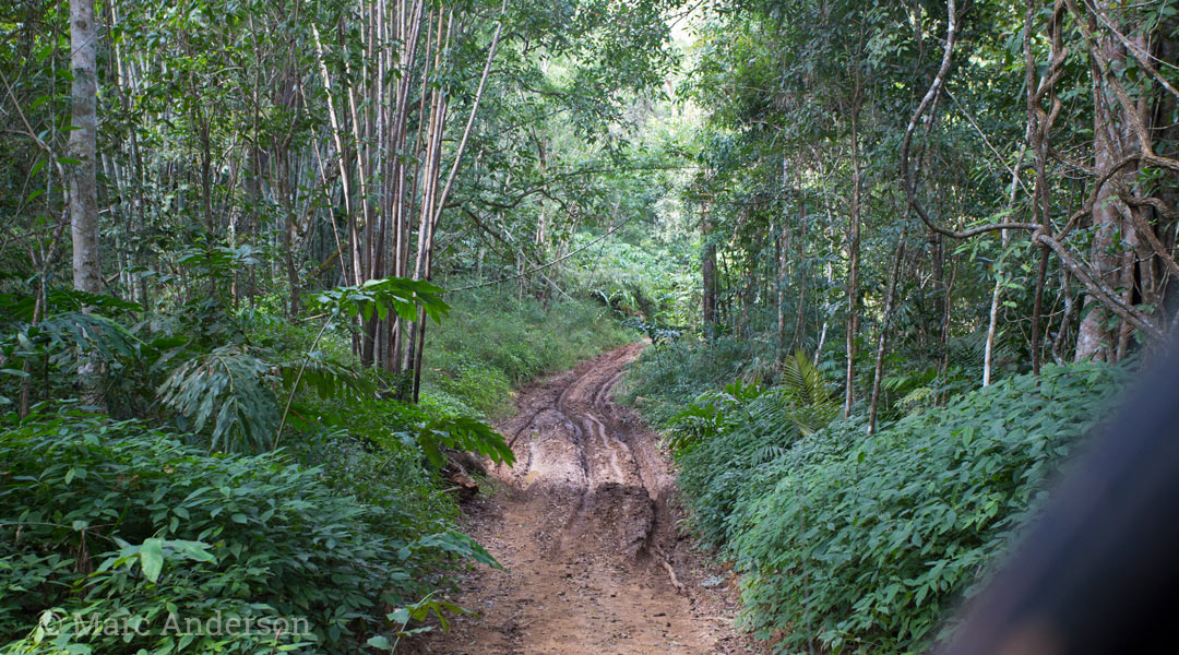 Muddy track in Thung Yai Wildlife Sanctuary