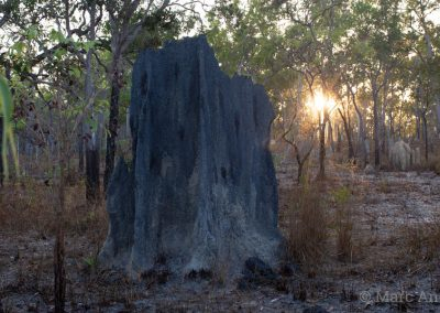 Termite mound and woodland