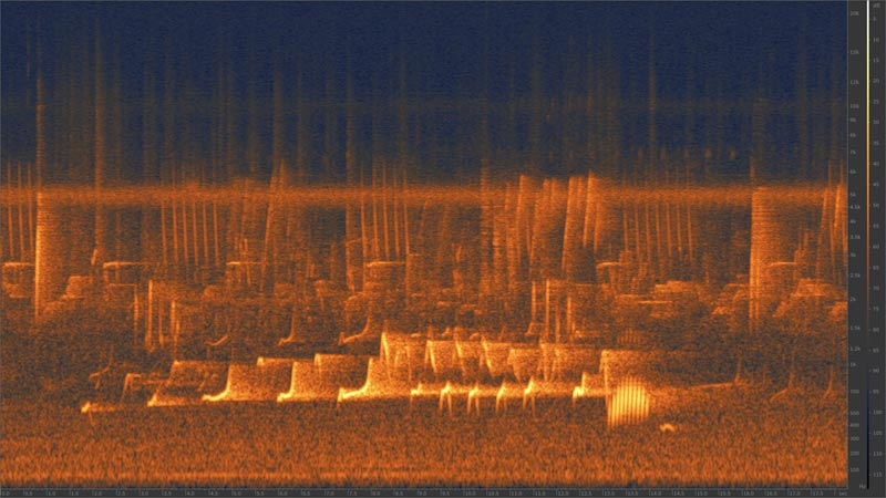 Spectrogram of Pileated Gibbon (Hylobates pileatus)  call