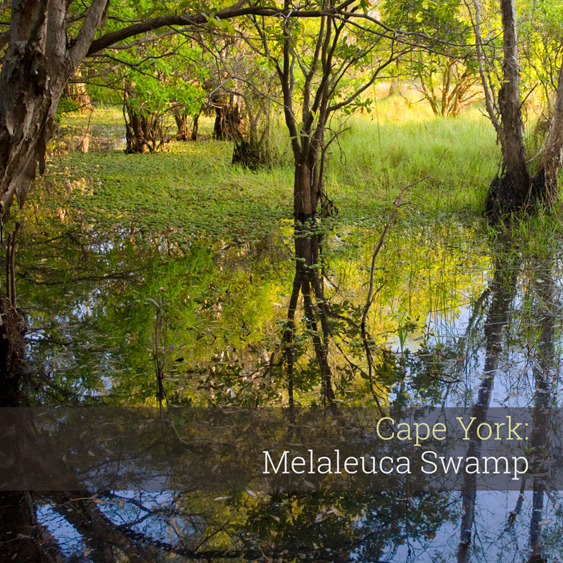 Melaleuca Swamp - Album Cover