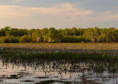 Lagoon at Dawn