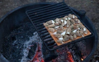 Alder Planked Morel Mushrooms with Thyme and Garlic