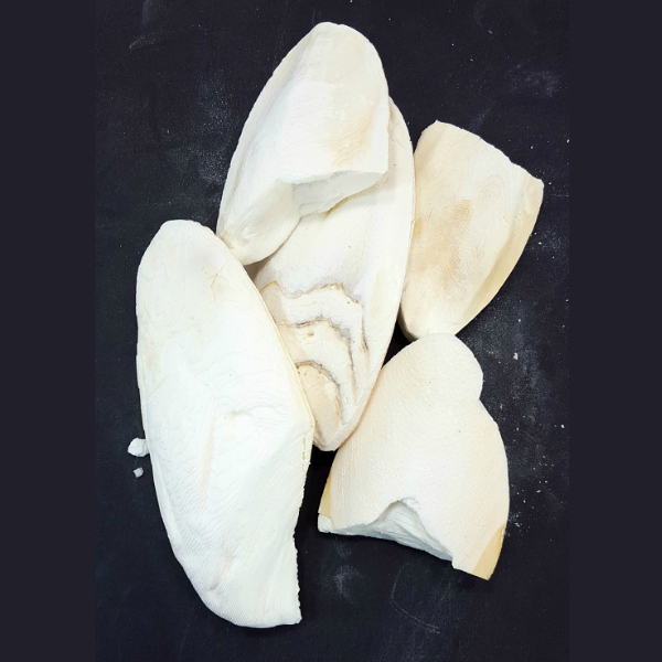 Cuttlebones A Natural Calcium Source Broken Pieces 1/4 lb (113.4 g)