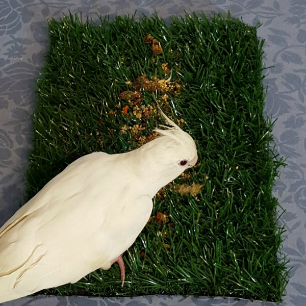 Great bird foraging toy from Tinkle Turf for Dogs. Grass & Tray