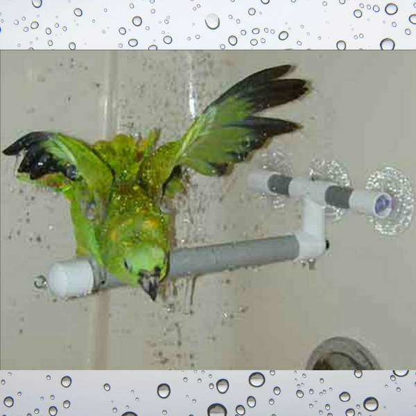 Shower & Window Fold-out Perch for Parrots by Pollys Small