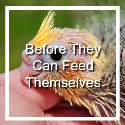 Hand Feed