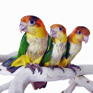 Medium Bird