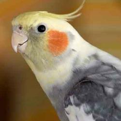 Smaller Bird