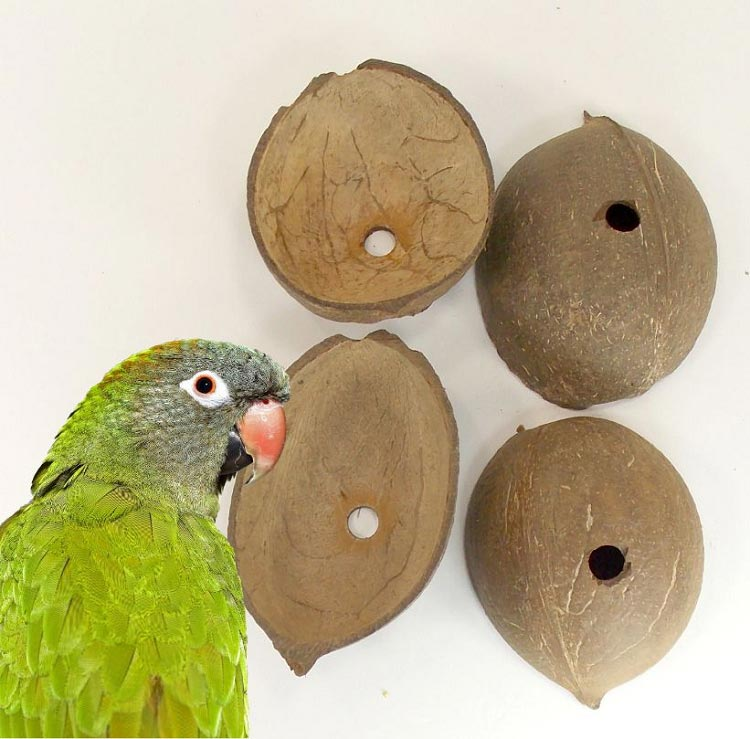 Coconut Smooth Shell Halves W Hole For Bird Toy Making 4 pc