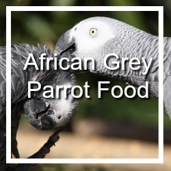 African Grey Bird Food
