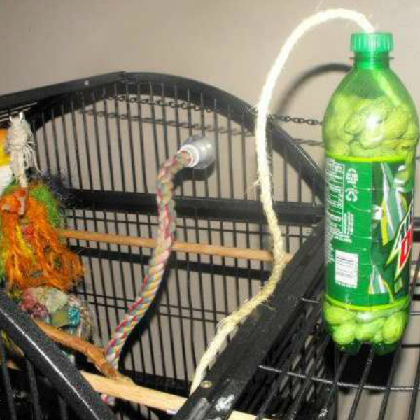 Free Bird Toy Soda Bottle With Treats Free Bird Toy Soda