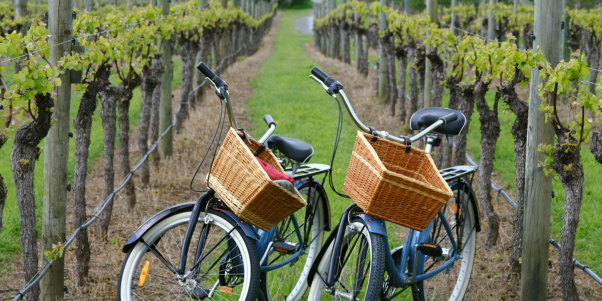 Bikes-in-Vineyards_Slideshow1200x600