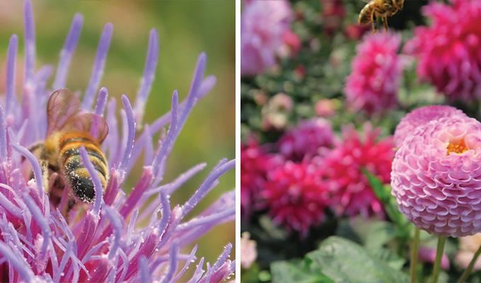 mendocino-coast-botanical-gardens-680