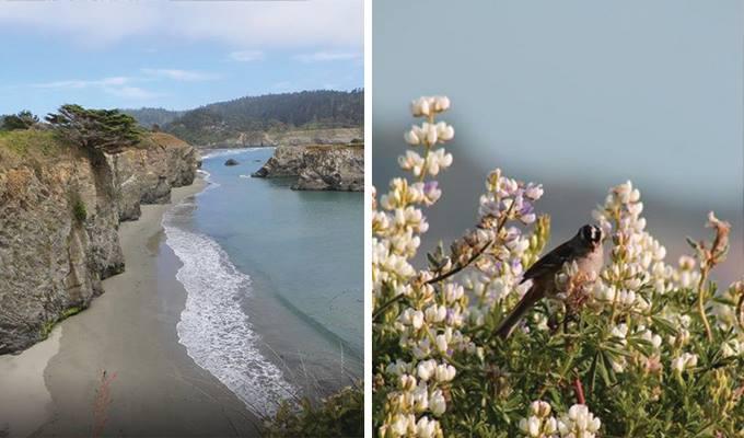 mendocino-headlands-state-park-680