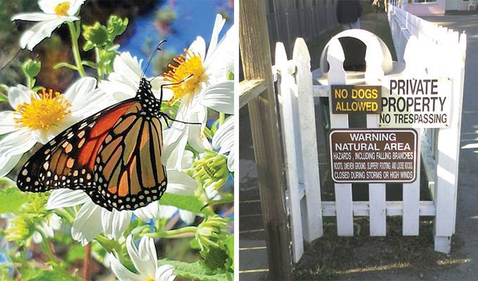 monarch-grove-butterfly-sanctuary-680