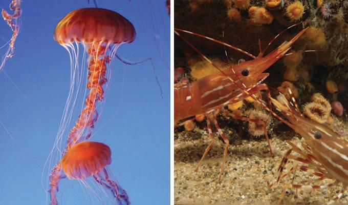 monterey-bay-aquarium-680