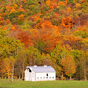 fall-forest-with-barn-virginia-region