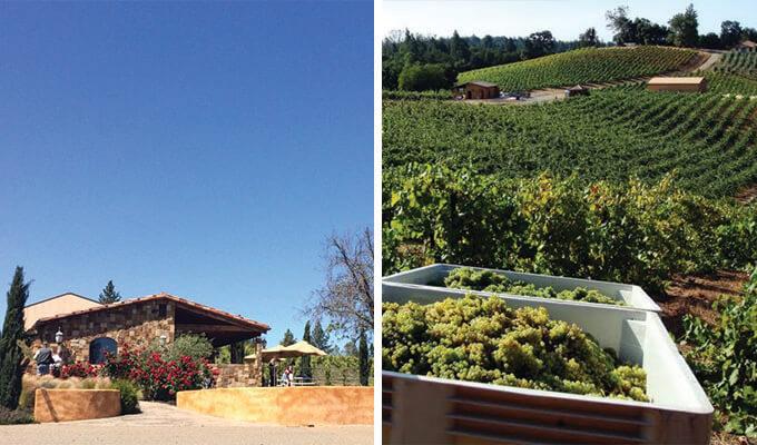 il-gioiello-winery-680