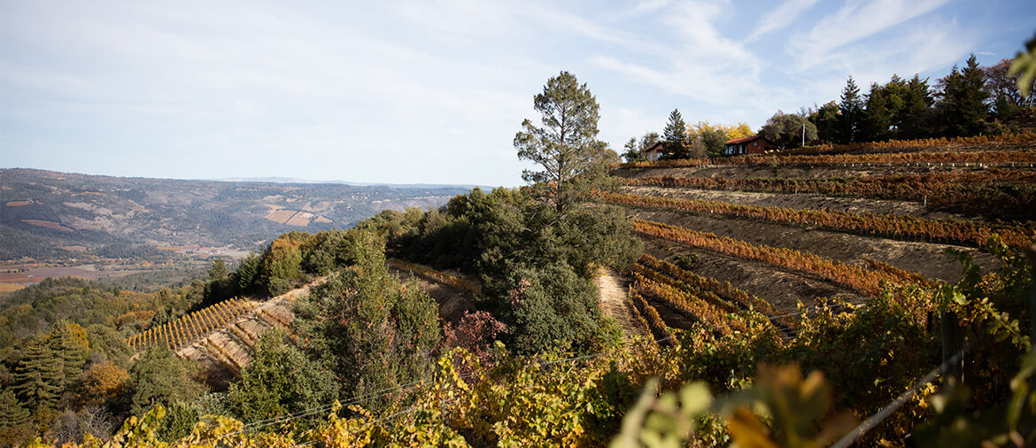 The 10 Most Beautiful Wineries In Sonoma County
