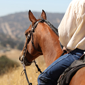 horseback-riding-Texas-Region