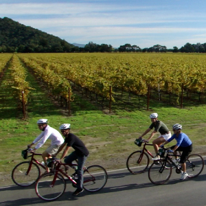 bike riding during the vineyards