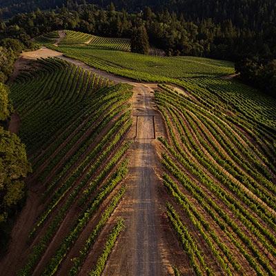 Mt. Veeder Vineyard
