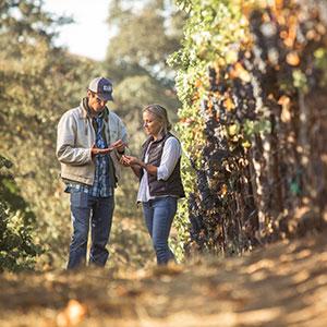 Garden Creek Vineyards